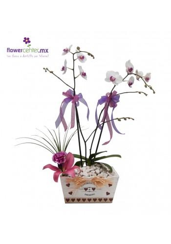 Orquídea en Sevilla