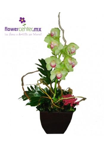 Orquídea Amor