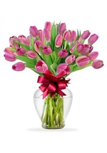 40 Tulips Magicos