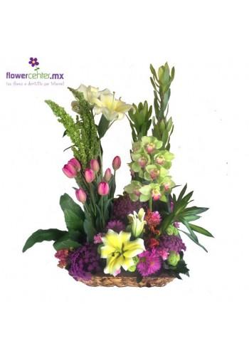 Romance de Orquídeas