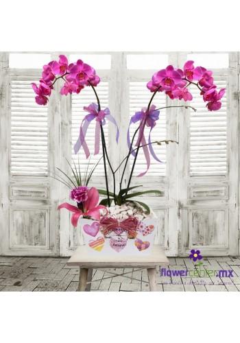 Orquidea de Ensueño