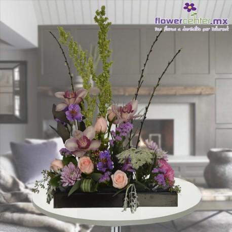 Elegancia de Orquídeas